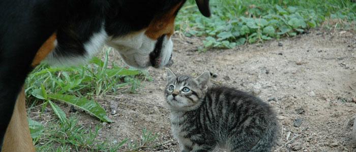 猫のにおいを嗅ぐ犬